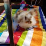 rabbit-grooming-packages